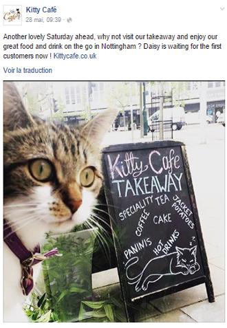 Crazy-Kity-Cafe